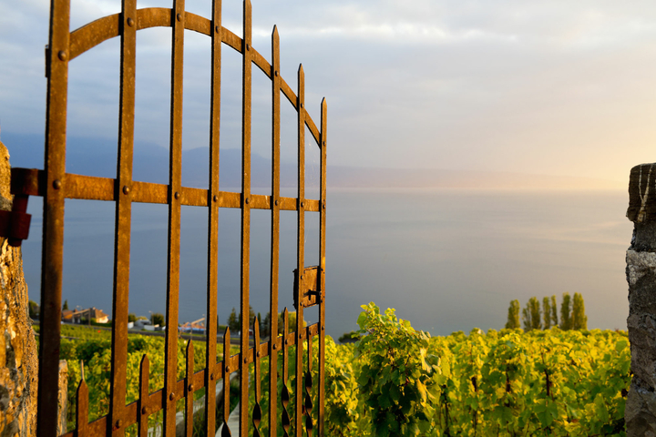 Genfer See - lavaux