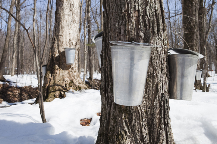 maple-syrup-kanadischer-ahornsirup